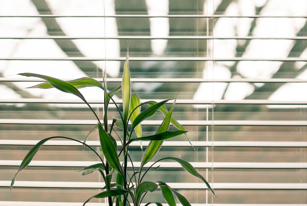 4 Reasons to Add Blinds to Your Windows
